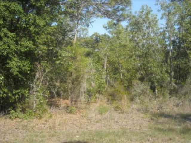 LOT 1 122ND AVE NE, Williston, FL 32696 (MLS #777372) :: Pristine Properties