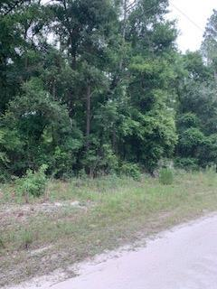 Lot 20 356th Ave NE, Old Town, FL 32680 (MLS #777930) :: Compass Realty of North Florida