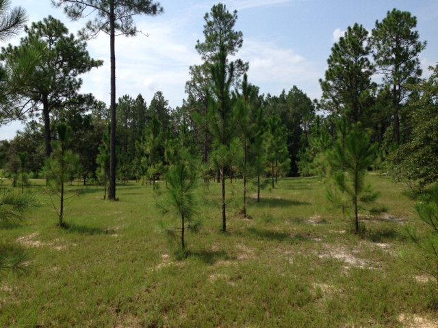 Cr 340 NE, High Springs, FL 32643 (MLS #778161) :: Pristine Properties