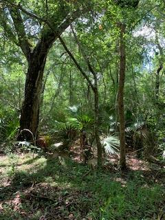 LOT 35 226th Ave SE, Old Town, FL 32680 (MLS #778268) :: Hatcher Realty Services Inc.