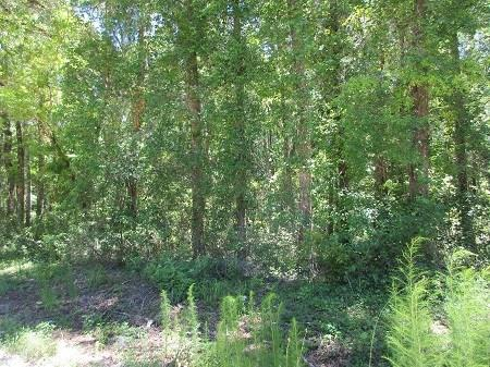 Lot 5 550th Street - Photo 1