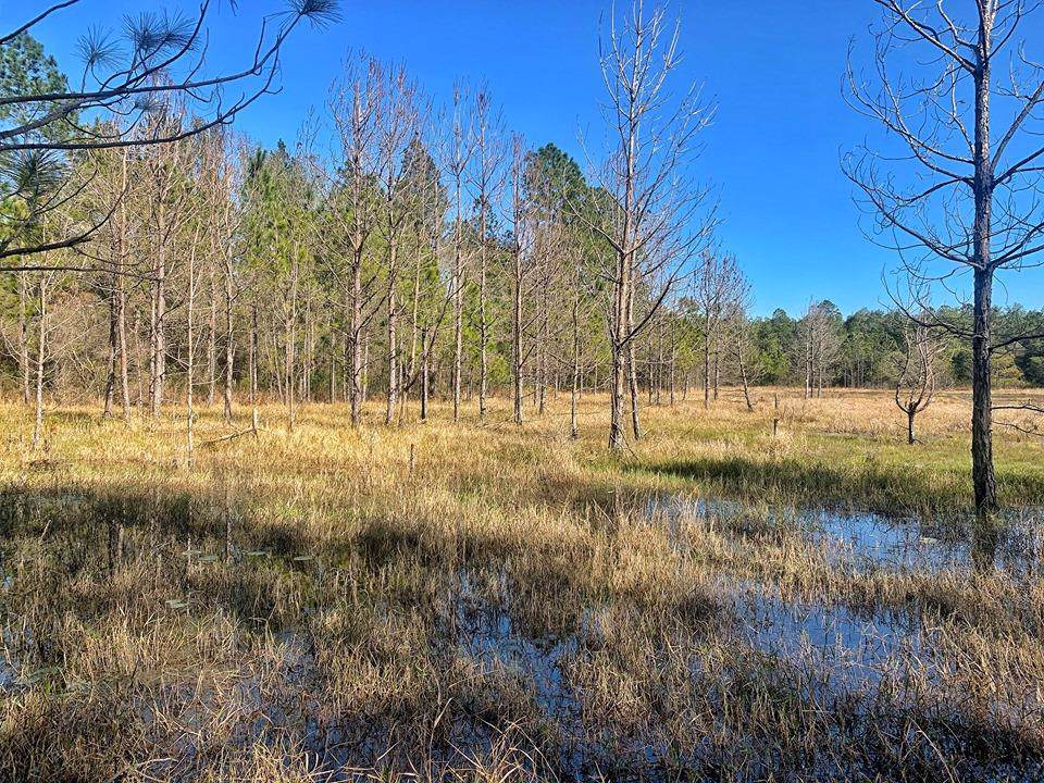 Asbell Creek Rd - Photo 1