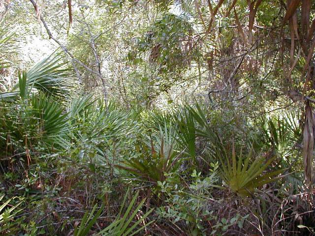County Road 351 SW, Horseshoe Beach, FL 32648 (MLS #780731) :: Compass Realty of North Florida