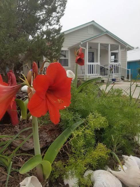 234 3rd St, Cedar Key, FL 32625 (MLS #781739) :: Compass Realty of North Florida