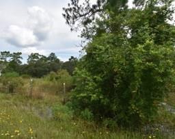 65th Place SW, Cedar Key, FL 32625 (MLS #776146) :: Pristine Properties
