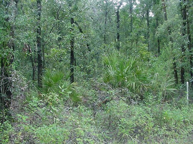 2 Acres 36th Lane NW, Bell, FL 32619 (MLS #778526) :: Pristine Properties