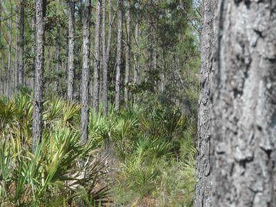 40 acres 87th Place NE, Bronson, FL 32621 (MLS #779101) :: Pristine Properties
