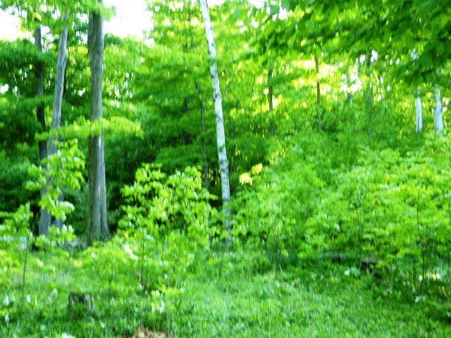 11645 Meadow Wood Ln, Ellison Bay, WI 54210 (#135286) :: Town & Country Real Estate