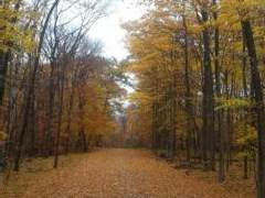 Lot 24 Chalet Ct, Egg Harbor, WI 54209 (#135980) :: Town & Country Real Estate