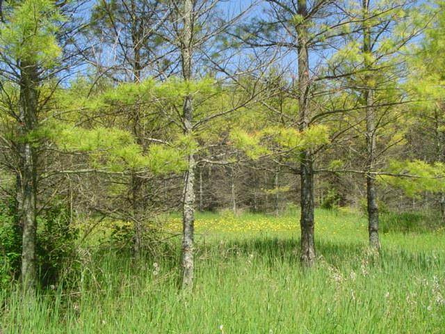 County Rd Zz, Town of Liberty Grov, WI 54234 (#136098) :: Town & Country Real Estate