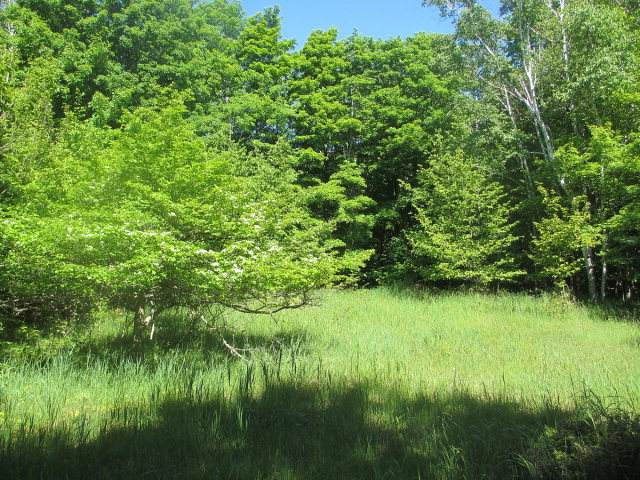 Lot 9 Green Tree Rd, Washington Island, WI 54246 (#136188) :: Town & Country Real Estate