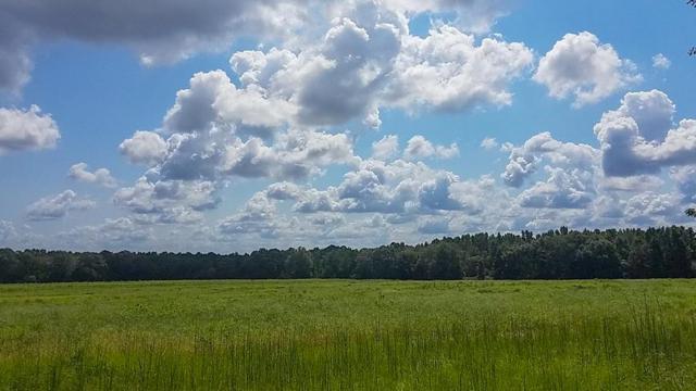 0 Ed Tolar Road (40 Acres), Pansey, AL 36370 (MLS #171118) :: Team Linda Simmons Real Estate