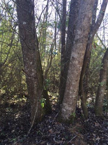 1 Old Mill Run, Dothan, AL 36303 (MLS #164334) :: Team Linda Simmons Real Estate
