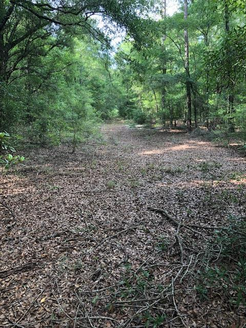 000 Hwy 123, Newton, AL 36352 (MLS #174169) :: Team Linda Simmons Real Estate