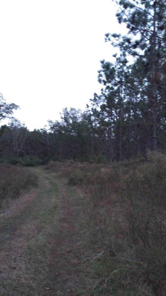 0 Jim Baxley Rd., Graceville, FL 32440 (MLS #175941) :: Team Linda Simmons Real Estate