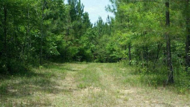 0 County Road 18, Newville, AL 36353 (MLS #178807) :: Team Linda Simmons Real Estate