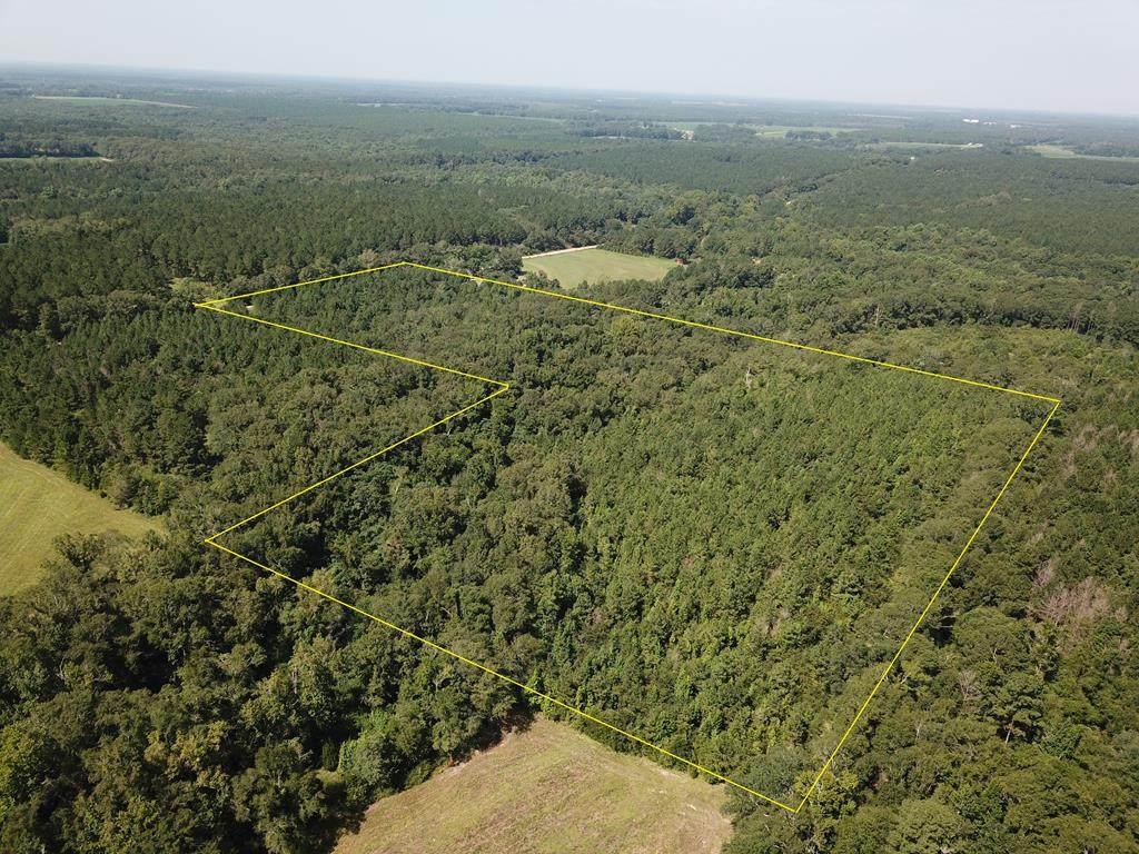 25 acres Coe Road - Photo 1