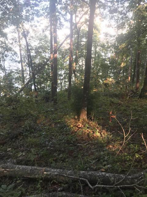 0 Lakeshore Drive, Lot 125, Abbeville, AL 36310 (MLS #181198) :: Team Linda Simmons Real Estate