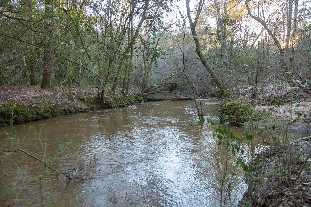 173 acres County Road 64 - Photo 1