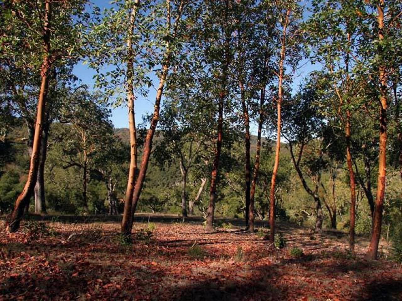 20 Arroyo Sequoia - Photo 1