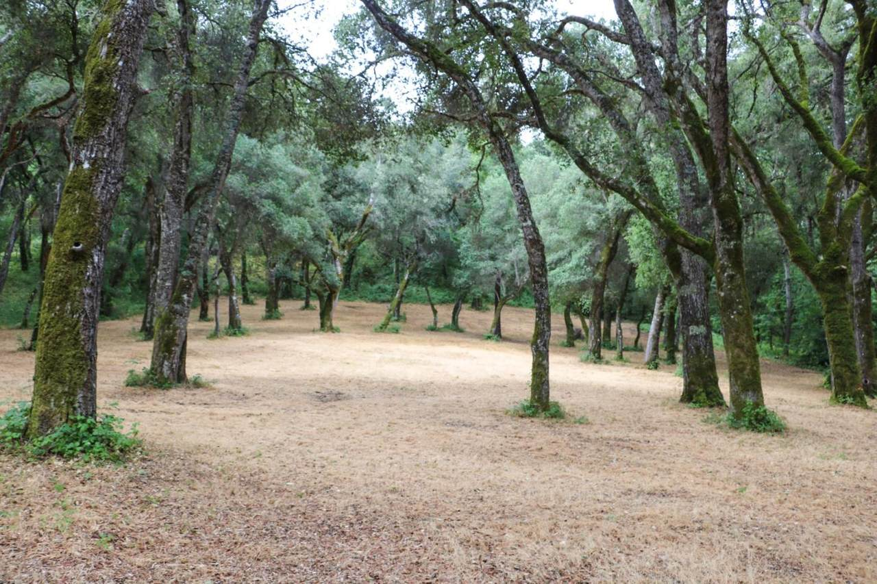 14 Arroyo Sequoia - Photo 1