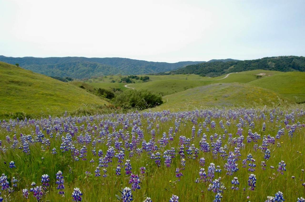 1 Penon Peak Trail - Photo 1