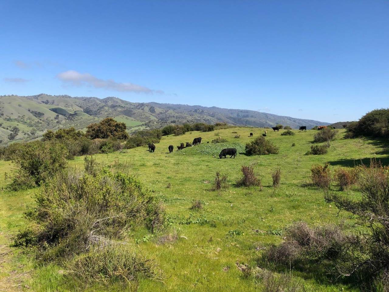 36000 Carmel Valley Road - Photo 1