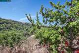 1255 Bollinger Canyon - Photo 5