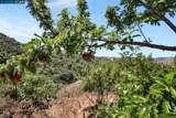 1255 Bollinger Canyon - Photo 6