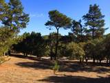 24262 Via Malpaso (Lot 28) - Photo 5
