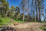 0 Buckhorn Ridge - Photo 1