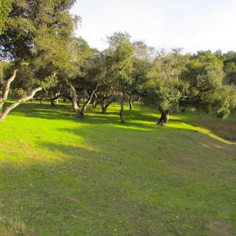9340 King Road, Salinas, CA 93907 (#ML81779012) :: Armario Venema Homes Real Estate Team