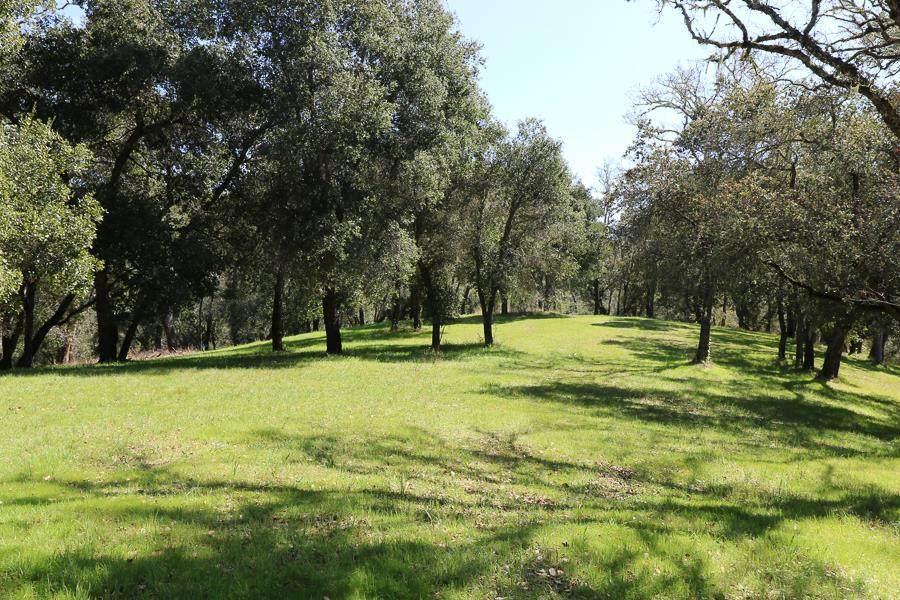 33 Arroyo Sequoia - Photo 1