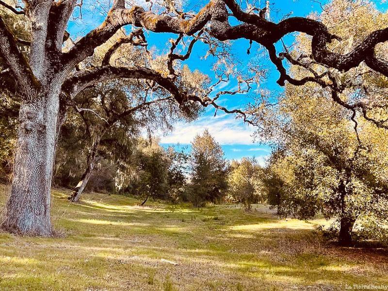 6 Arroyo Sequoia - Photo 1