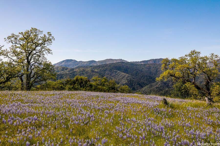 24 Long Ridge Trail - Photo 1
