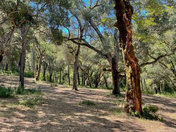10 Garzas Trail - Photo 1