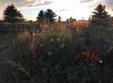 1401 Windermere Way - Photo 53