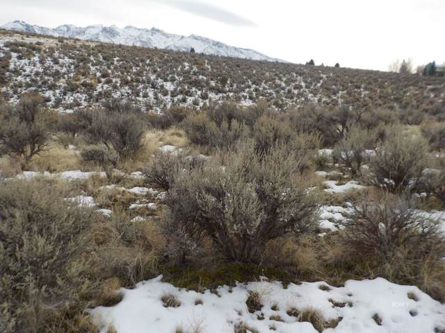 TBD Hog Tommy Road, Lamoille, NV 89822 (MLS #3618512) :: Shipp Group