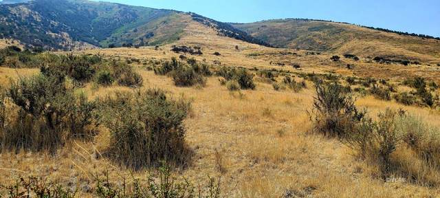 TBD Sustacha Drive, Lamoille, NV 89828 (MLS #3619383) :: Shipp Group