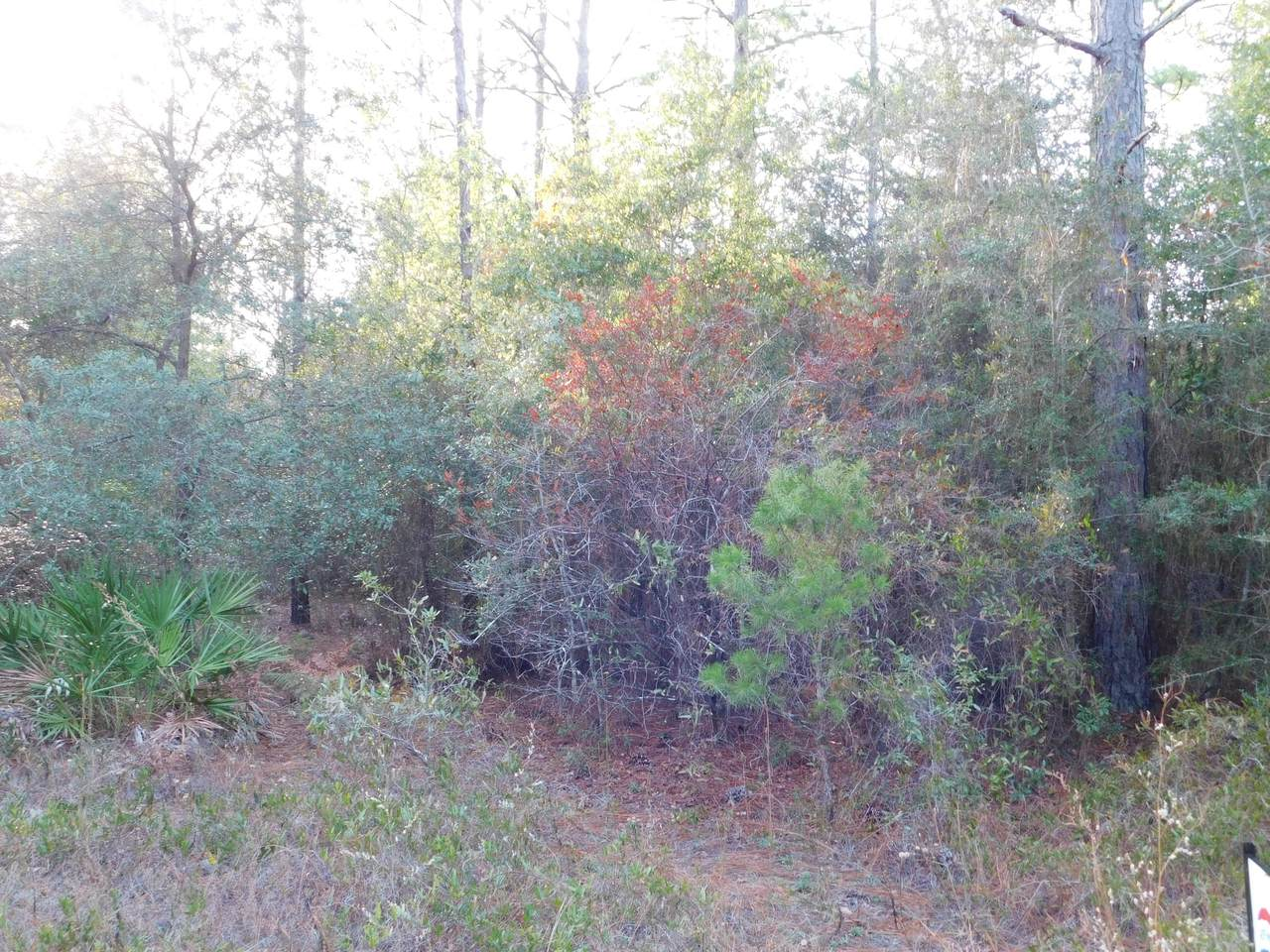 2.98 AC-D Mt. Olive Road - Photo 1