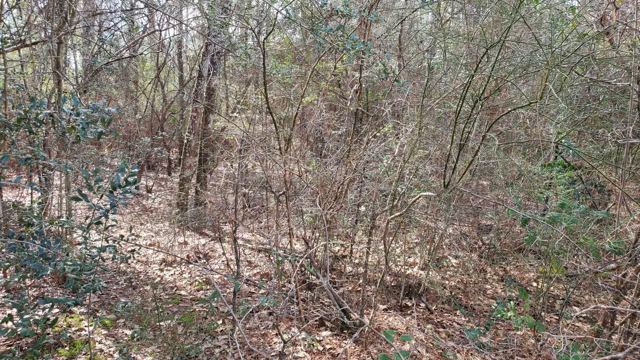 173 Seneca Trail - Photo 1