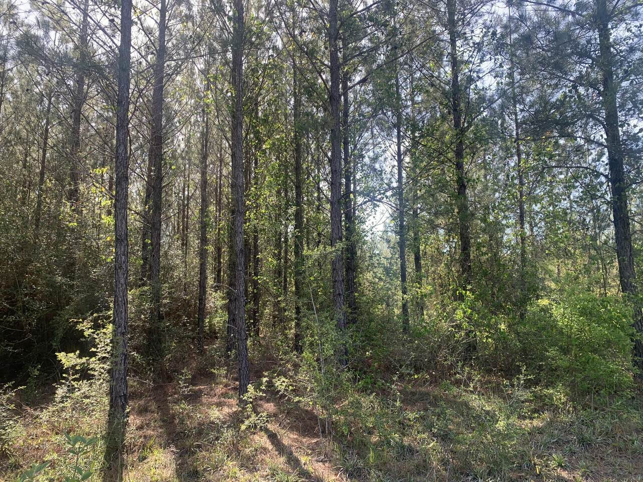 17 acres Munson Highway - Photo 1