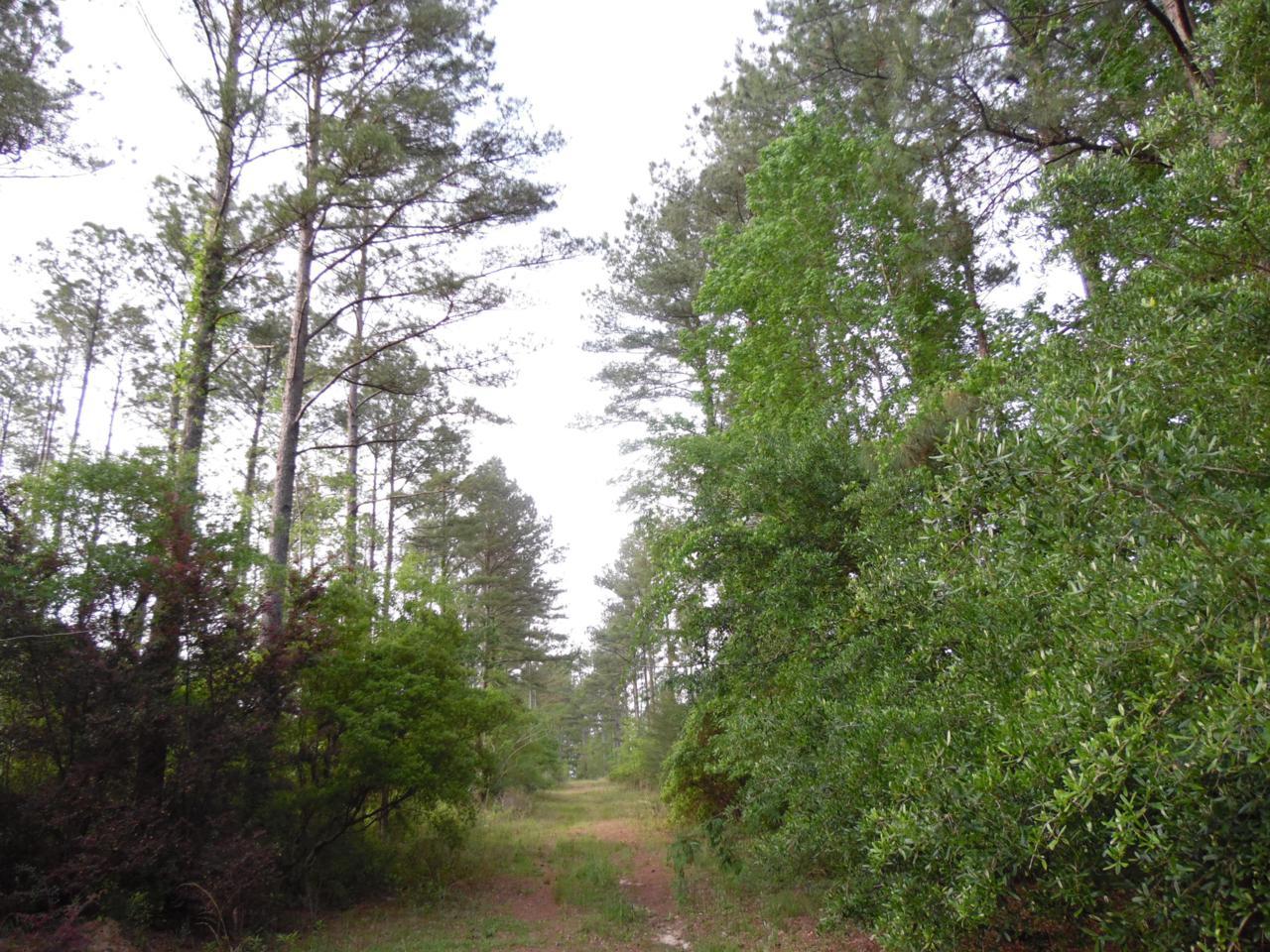 44 acres 4714 Co. Hwy 89 - Photo 1