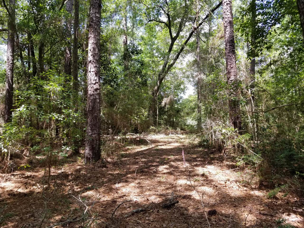 5.49 Acres White Oak Drive - Photo 1