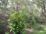 1237 Elderflower Drive - Photo 2