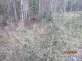 Lot 3 Co Highway 393 - Photo 11