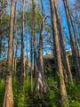32 Cypress Street - Photo 34