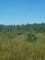 80 acres Hart Rd - Photo 1