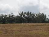 65 Acres Us Highway 331 - Photo 14