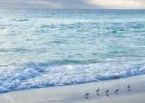 5115 Gulf Dr.  Seychelles Condo - Photo 64
